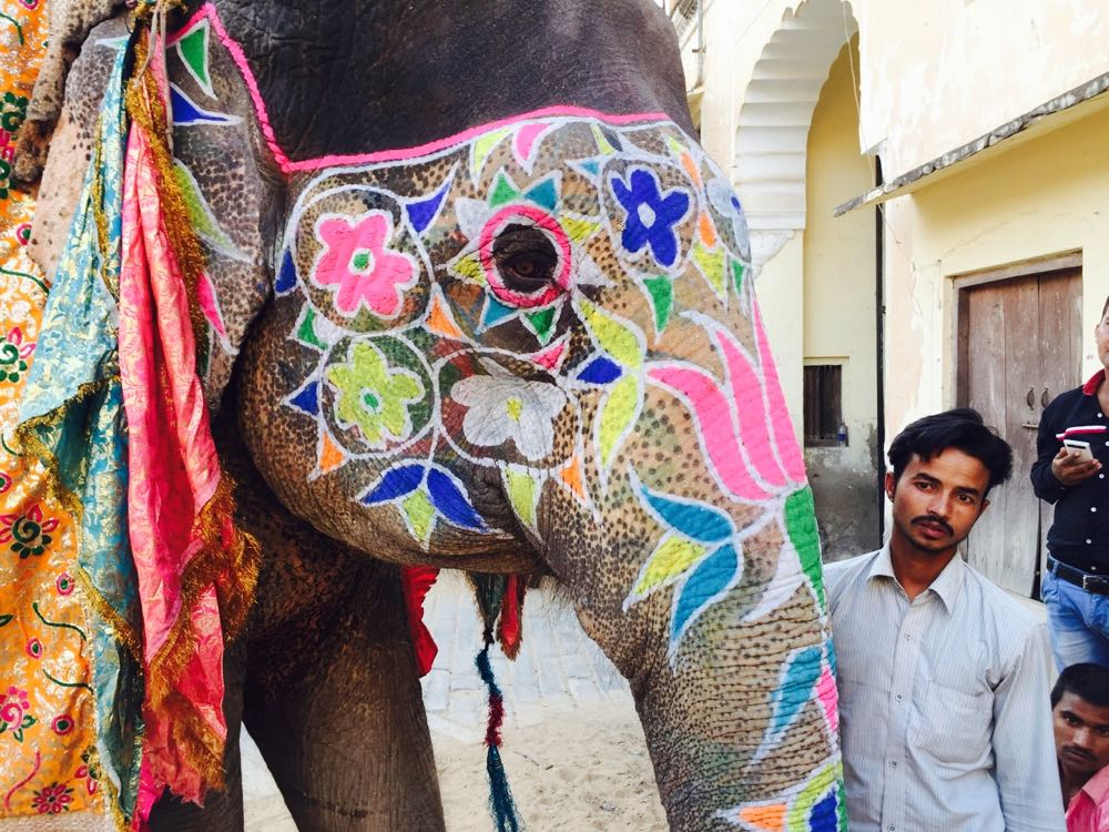 Painted wedding elephant and his handler waiting for the groom